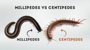 Centipedes Millipedes Skyline Pest Control